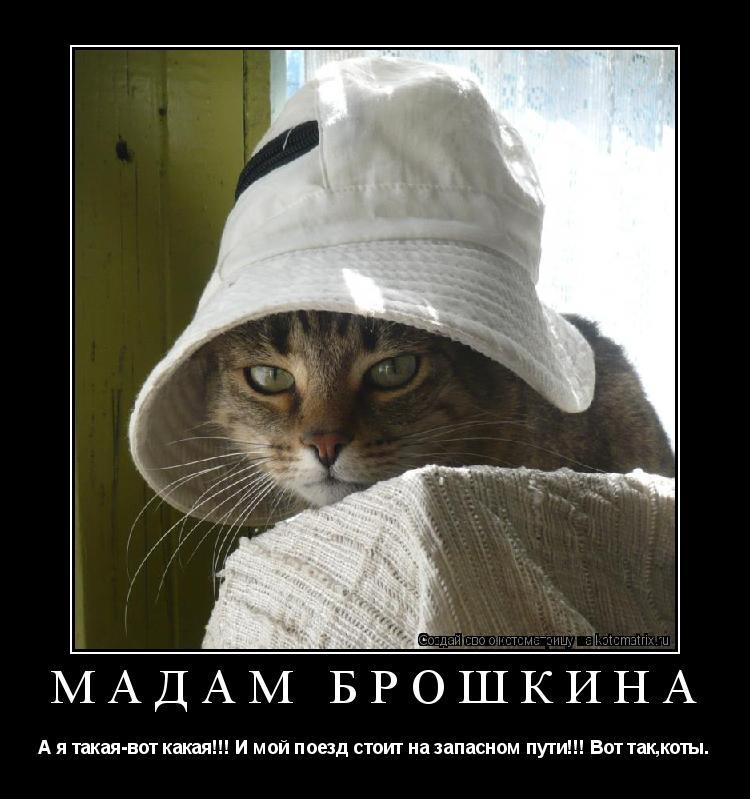 Котоматрица: Мадам Брошкина А я такая-вот какая!!! И мой поезд стоит на запасном пути!!! Вот так,коты.