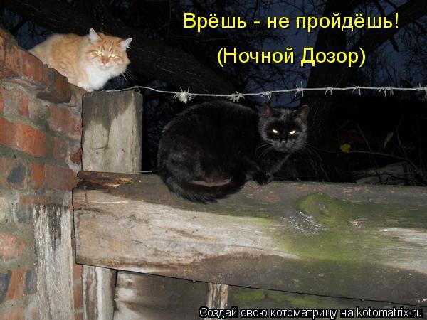 Котоматрица: Врёшь - не пройдёшь! (Ночной Дозор)