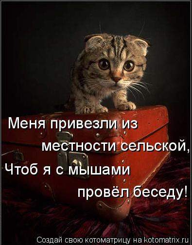 Котоматрица: Меня привезли из местности сельской, Чтоб я с мышами  провёл беседу!