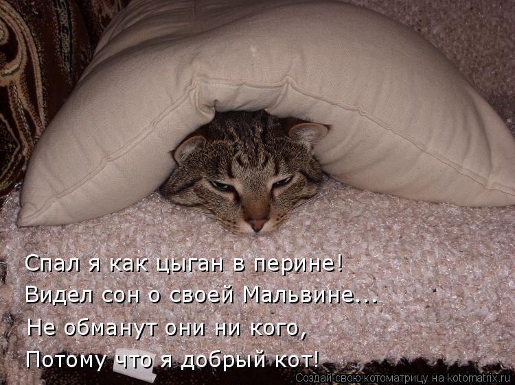 Котоматрица: Спал я как цыган в перине! Видел сон о своей Мальвине... Не обманут они ни кого, Потому что я добрый кот!