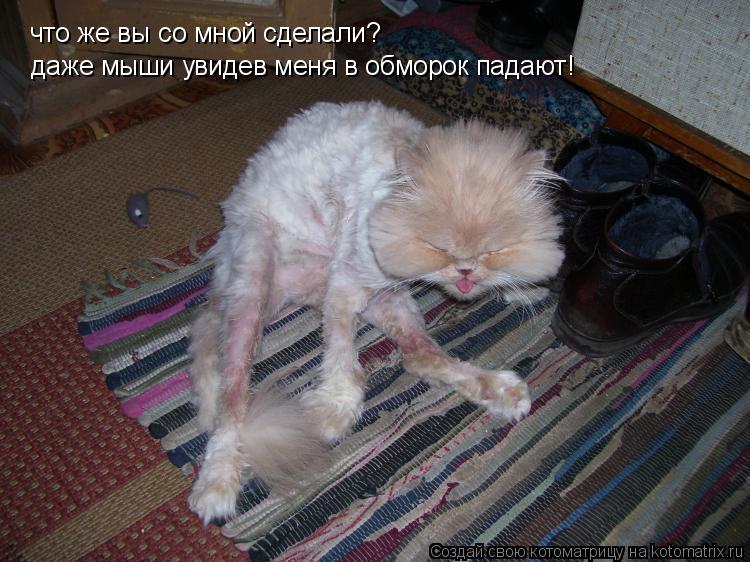 Котоматрица: что же вы со мной сделали? даже мыши увидев меня в обморок падают!