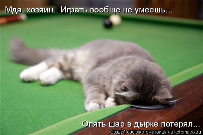 Котоматрица: Мда, хозяин.. Играть вообще не умеешь... Опять шар в дырке потерял...