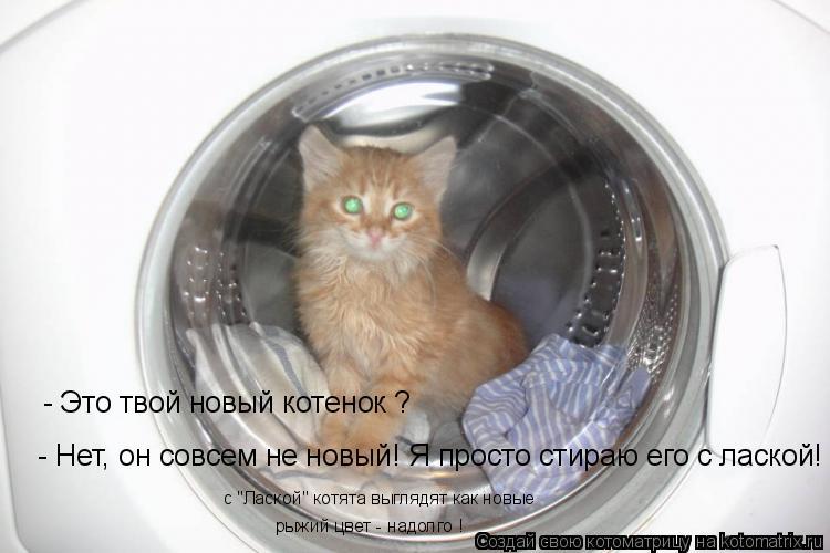 """Котоматрица: - Это твой новый котенок ? - Нет, он совсем не новый! Я просто стираю его с лаской! с """"Лаской"""" котята выглядят как новые рыжий цвет - надолго !"""