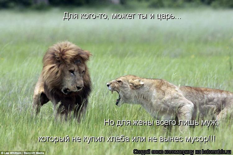 Котоматрица: Для кого-то, может ты и царь... Но для жены всего лишь муж, который не купил хлеба или не вынес мусор!!!