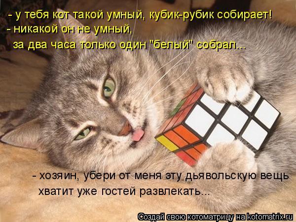 Котоматрица: - у тебя кот такой умный, кубик-рубик собирает! - никакой он не умный, - хозяин, убери от меня эту дьявольскую вещь хватит уже гостей развлекат