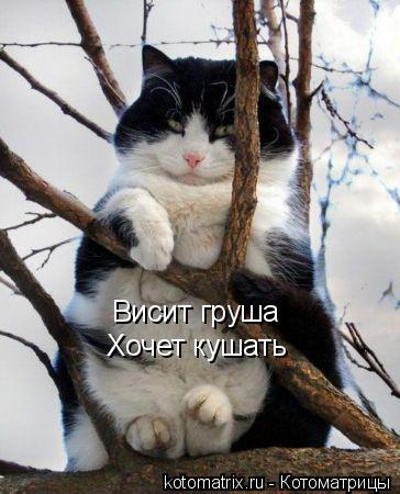 Котоматрица: Висит груша Хочет кушать
