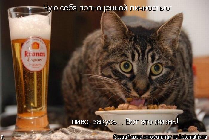 Котоматрица: Чую себя полноценной личностью: пиво, закусь... Вот это жизнь!