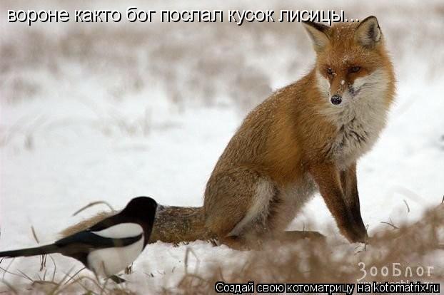 Котоматрица: вороне както бог послал кусок лисицы...