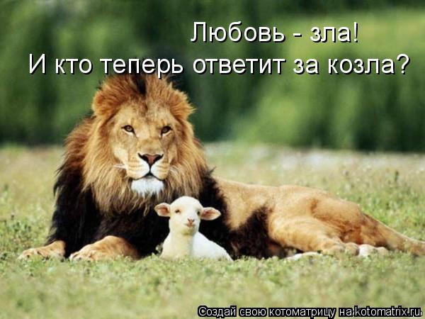 Котоматрица: Любовь - зла! И кто теперь ответит за козла?