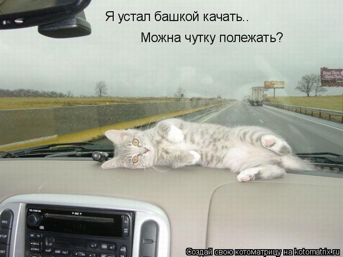 Котоматрица: Я устал башкой качать.. Можна чутку полежать?