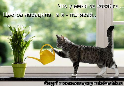 Котоматрица: Что у меня за хозяйка ... Цветов насадила , а я - поливай...