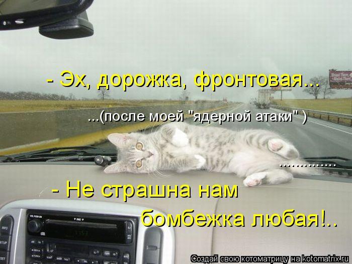 """Котоматрица: - Эх, дорожка, фронтовая... ...(после моей """"ядерной атаки"""" ) .............. - Не страшна нам  бомбежка любая!.."""