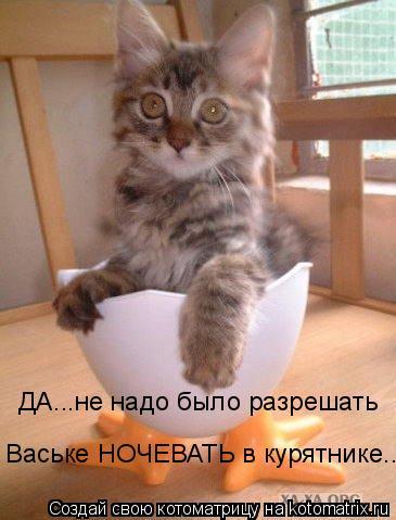 Котоматрица: ДА...не надо было разрешать  Ваське НОЧЕВАТЬ в курятнике...