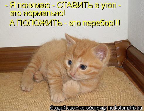 Котоматрица: - Я понимаю - СТАВИТЬ в угол - это нормально! А ПОЛОЖИТЬ - это перебор!!!