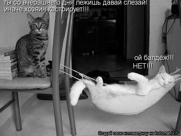 Котоматрица: ой балдёж!!! ты со вчерашнего дня лежишь давай слезай! иначе хозяин кастрирует!!! НЕТ!!!