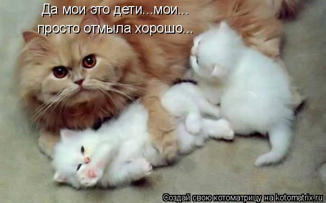 Котоматрица: Да мои это дети...мои... просто отмыла хорошо...