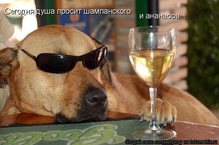 Котоматрица: Сегодня душа просит шампанского и ананасов ...