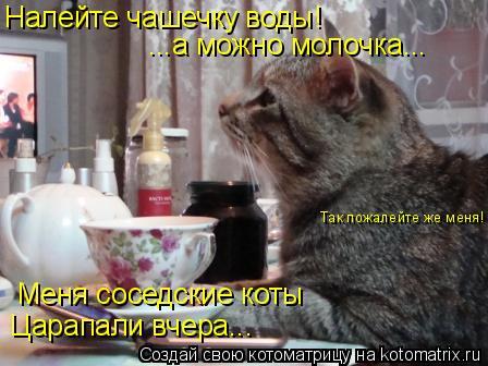 Котоматрица: Налейте чашечку воды! ...а можно молочка... Меня соседские коты Царапали вчера... Так пожалейте же меня!