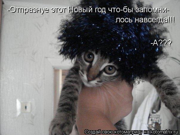 Котоматрица: -Отпразнуе этот Новый год что-бы запомни- лось навсегда!!! -А???