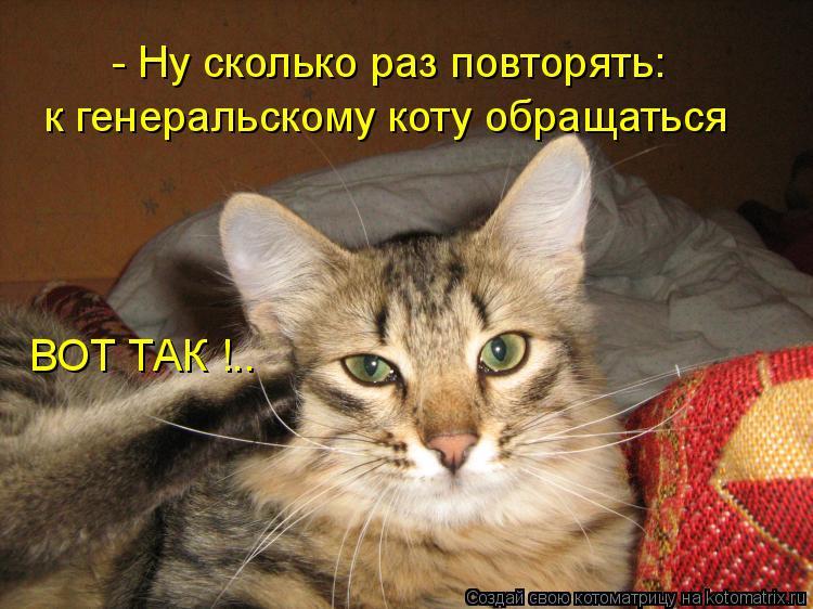Котоматрица: - Ну сколько раз повторять: к генеральскому коту обращаться ВОТ ТАК !..