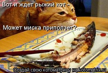 Котоматрица: Вот и ждет рыжий кот - Может миска приползет?..