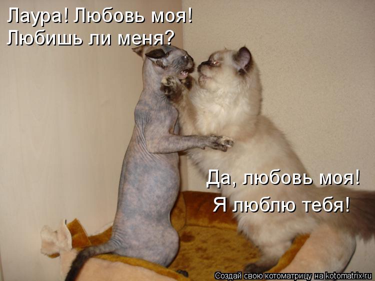 Котоматрица: Лаура! Любовь моя! Любишь ли меня? Да, любовь моя! Я люблю тебя!