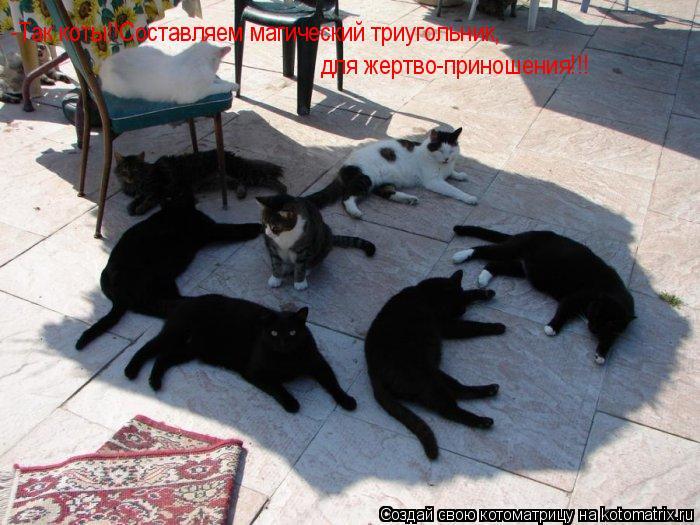 Котоматрица: -Так коты!!Составляем магический триугольник, для жертво-приношения!!!