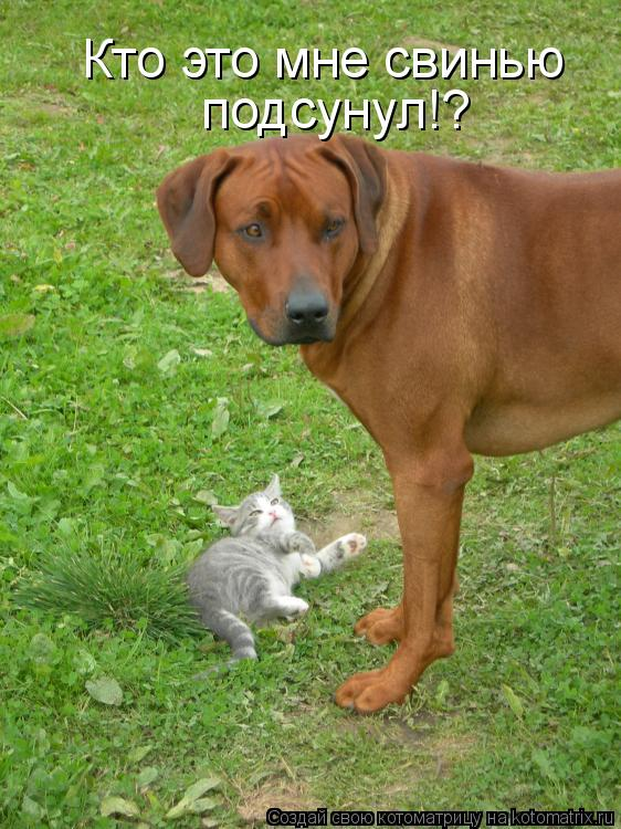 Котоматрица: Кто это мне свинью  подсунул!?