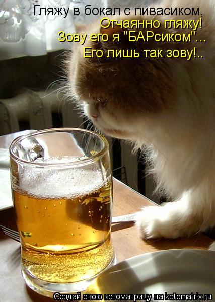 """Котоматрица: Гляжу в бокал с пивасиком, Отчаянно гляжу! Зову его я """"БАРсиком""""... Его лишь так зову!.."""