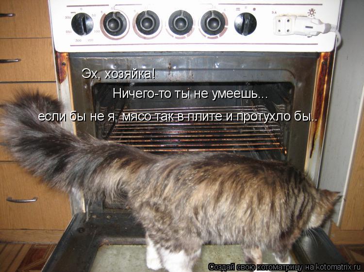 Котоматрица: Эх, хозяйка! Ничего-то ты не умеешь... если бы не я, мясо так в плите и протухло бы..