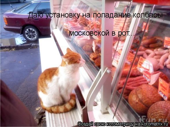 Котоматрица: Даю установку на попадание колбасы московской в рот... В крайнем случае, в лапы...
