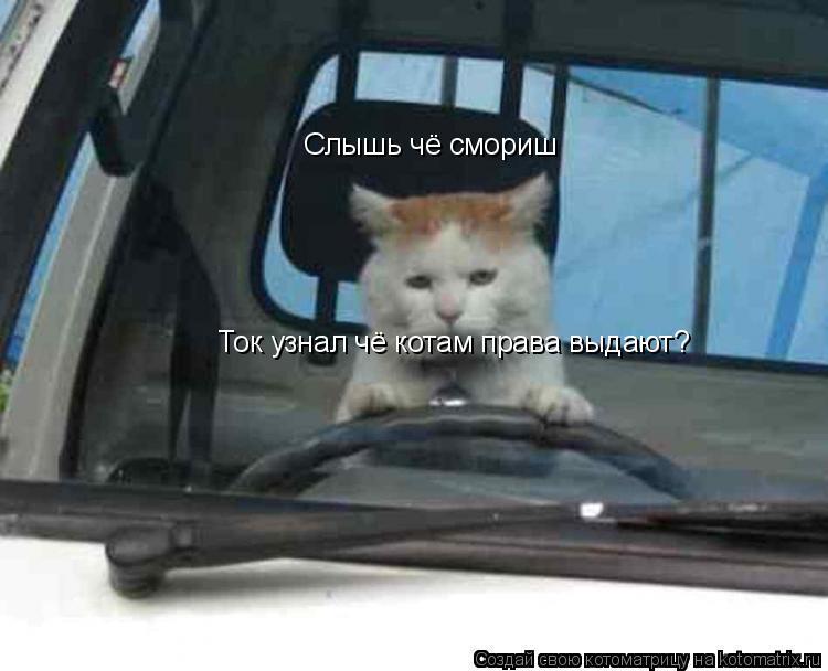 Котоматрица: Слышь чё смориш Ток узнал чё котам права выдают?