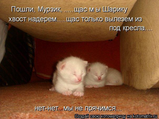 Котоматрица: Пошли, Мурзик, .....щас м ы Шарику  хвост надерем.....щас только вылезем из  под кресла.... нет-нет...мы не прячимся...