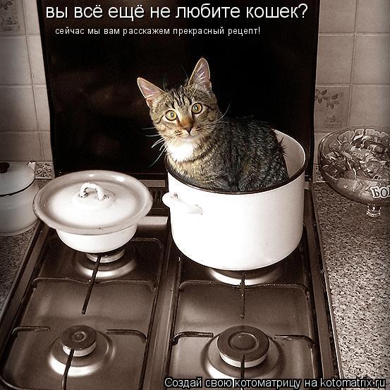 Котоматрица: вы всё ещё не любите кошек? сейчас мы вам расскажем прекрасный рецепт!