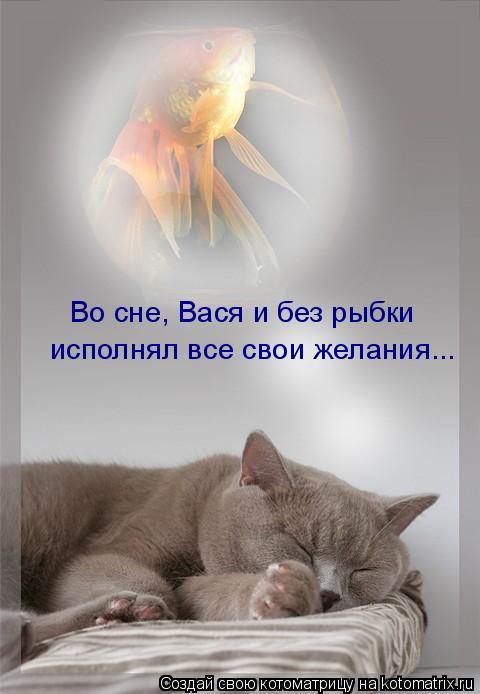 Котоматрица: исполнял все свои желания... Во сне, Вася и без рыбки