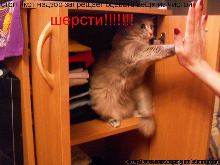 Котоматрица: стоп!!!кот надзор запрещает одевать вещи из чистой шерсти!!!!!!!