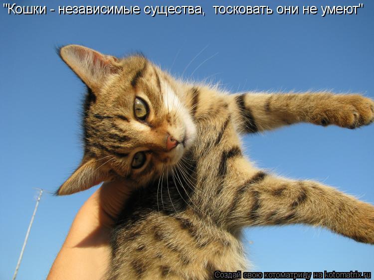 """Котоматрица: """"Кошки - независимые существа,  тосковать они не умеют"""""""