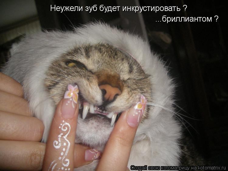Котоматрица: Неужели зуб будет инкрустировать ? ...бриллиантом ?