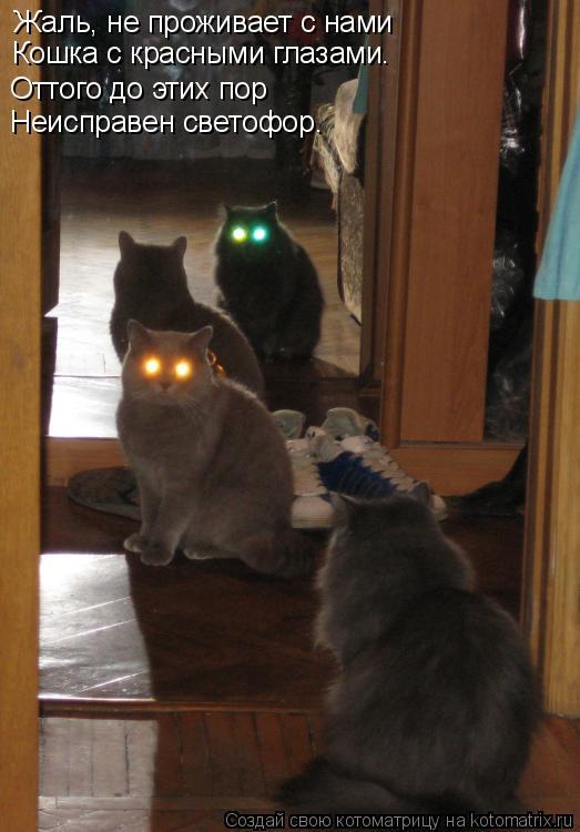Котоматрица: Жаль, не проживает с нами Кошка с красными глазами. Оттого до этих пор Неисправен светофор.