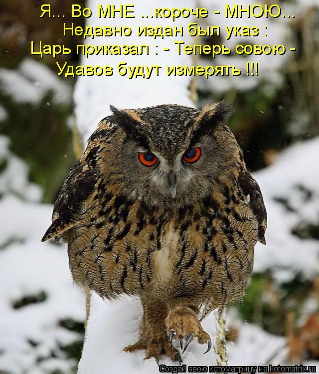 Котоматрица: Я... Во МНЕ ...короче - МНОЮ... Недавно издан был указ : Царь приказал : - Теперь совою - Удавов будут измерять !!!