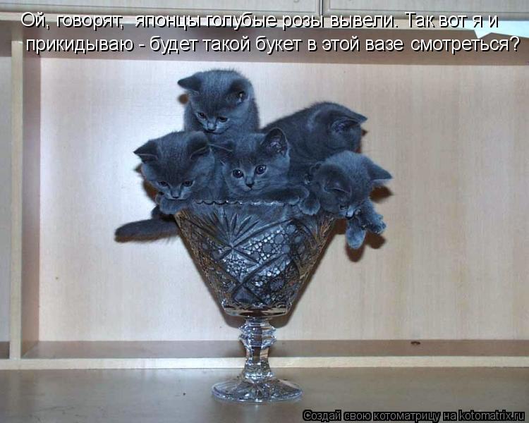 Котоматрица: прикидываю - будет такой букет в этой вазе Ой, говорят,  японцы голубые розы вывели. Так вот я и  смотреться?
