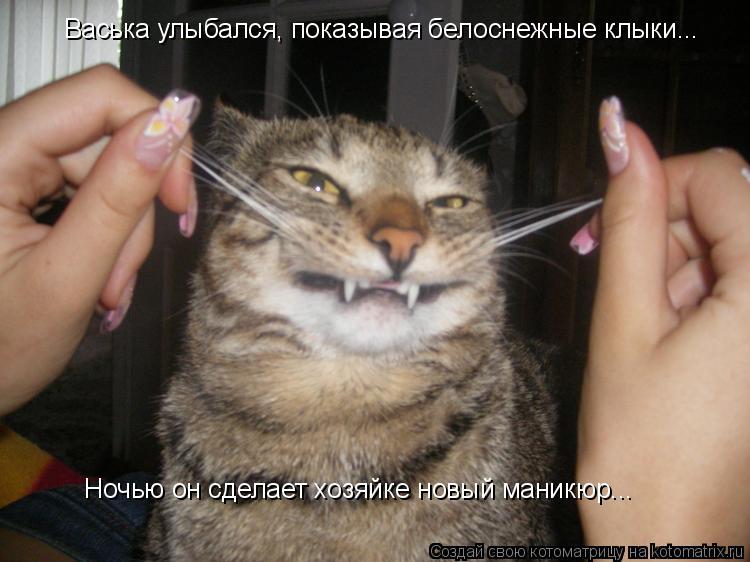 Котоматрица: Васька улыбался, показывая белоснежные клыки... Ночью он сделает хозяйке новый маникюр...