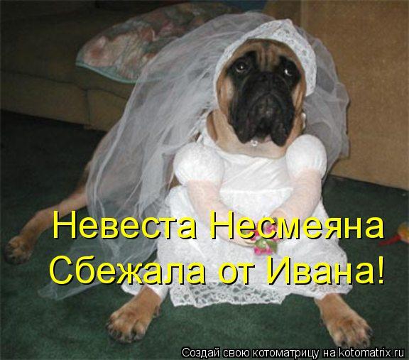 Котоматрица: Невеста Несмеяна Сбежала от Ивана!
