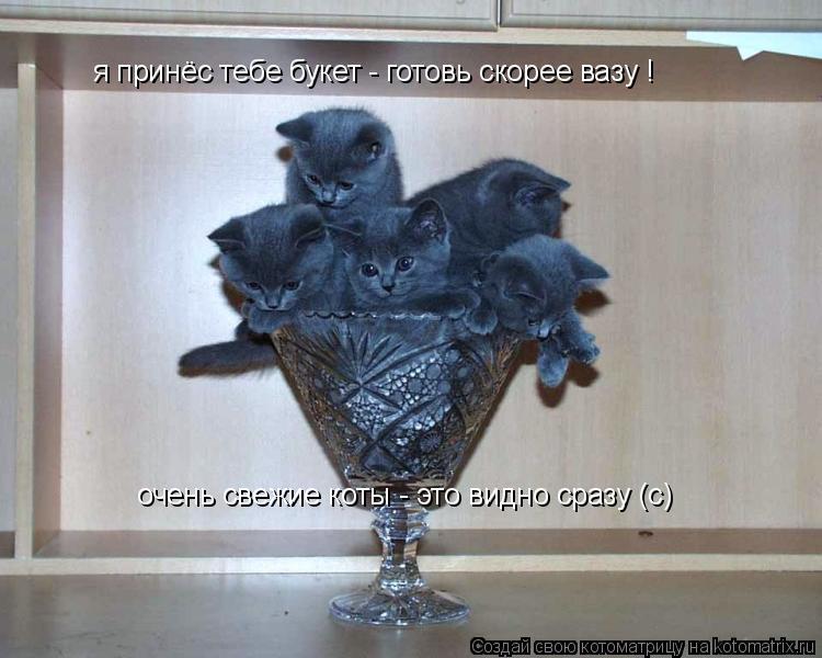 Котоматрица: я принёс тебе букет - готовь скорее вазу ! я принёс тебе букет - готовь скорее вазу ! очень свежие коты - это видно сразу (с)