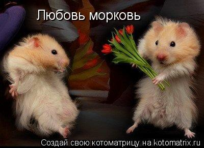 Котоматрица: Любовь морковь