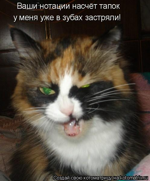 Котоматрица: Ваши нотации насчёт тапок у меня уже в зубах застряли!