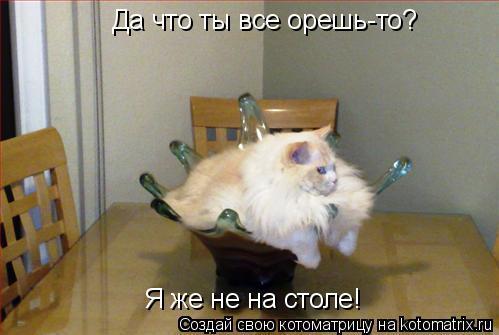 Котоматрица: Да что ты все орешь-то? Я же не на столе!