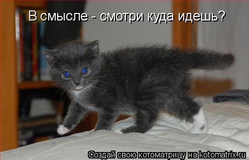 http://kotomatrix.ru/images/lolz/2009/11/24/414633.jpg