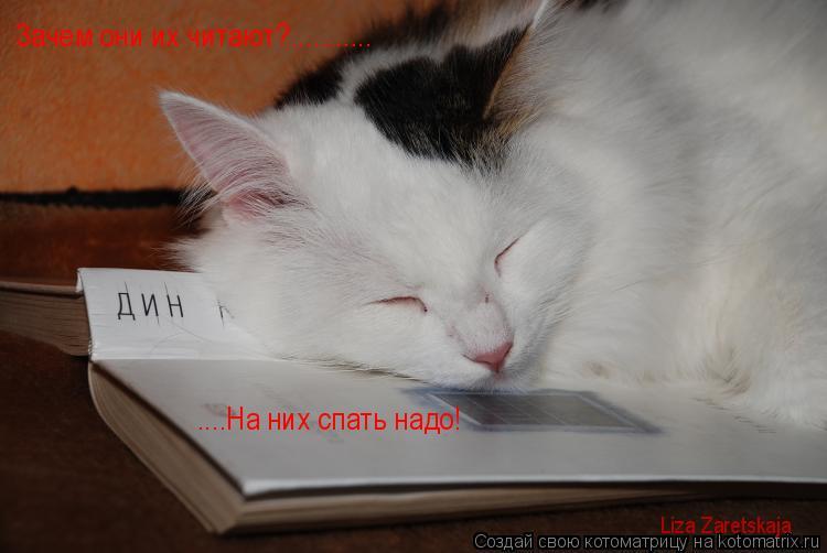 Котоматрица: Зачем они их читают?........... ....На них спать надо! Liza Zaretskaja