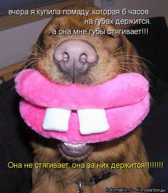 Котоматрица: вчера я купила помаду, которая 6 часов   на губах держится.  а она мне губы стягивает!!! Она не стягивает, она за них держится!!!!!!!!
